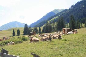 Tirol Berwangertal : juli 2017