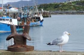 Rondreis Schotland  september 2012